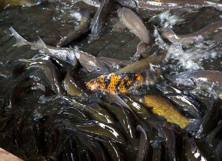 """Cisza, stawy, świeże ryby i Okrasa – czyli super warsztaty towarzyszące premierze książki """"Ryby są super"""""""